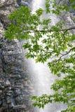 Świezi zieleń liście Fotografia Stock