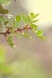 Świezi zieleń liście w lesie Fotografia Royalty Free