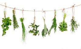 Świezi ziele zdjęcie stock
