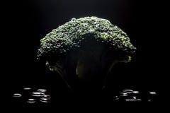 Świezi zieleni brokuły z wodnych kropel makro- zakończeniem na czerni Zdjęcia Royalty Free