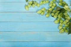 Świezi zieleni chmiel rożki na błękitnym drewnianym tle Składnik dla piwnej produkci Odgórny widok z kopii przestrzenią dla twój  Zdjęcie Royalty Free