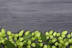 Świezi zieleni chmiel rożki na czarnym drewnianym tle Składnik dla piwnej produkci Odgórny widok z kopii przestrzenią dla twój te Obrazy Stock
