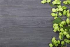 Świezi zieleni chmiel rożki na czarnym drewnianym tle Składnik dla piwnej produkci Odgórny widok z kopii przestrzenią dla twój te Fotografia Royalty Free