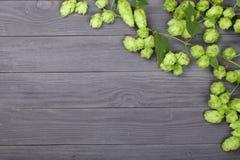 Świezi zieleni chmiel rożki na czarnym drewnianym tle Składnik dla piwnej produkci Odgórny widok z kopii przestrzenią dla twój te Obrazy Royalty Free