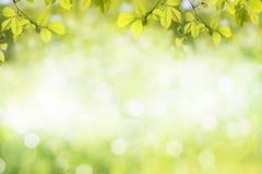 Świezi zieleni drzewo liście, rama Naturalny tło Fotografia Royalty Free