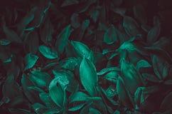 Świezi zieleni liście w ogródzie obraz stock