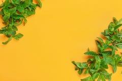 Świezi zieleni nowi liście na koloru tle Obrazy Stock