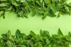 Świezi zieleni nowi liście na koloru tle Zdjęcia Stock