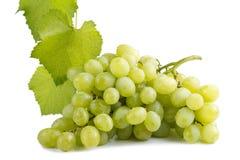 Świezi zieleni winogrona z liść i wody kroplami Zdjęcia Stock