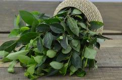 Świezi zielona herbata liście na drewnianym tle zdjęcia royalty free