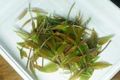 Świezi zielonej oliwki liście i sałata liście na bielu talerzu Fotografia Royalty Free