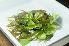 Świezi zielonej oliwki liście i sałata liście na bielu talerzu Zdjęcia Royalty Free