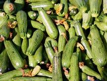 świezi zucchinis Zdjęcie Royalty Free