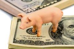 Świnia na dolarowych banknotach zdjęcia stock
