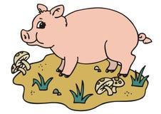 świnia Obraz Royalty Free