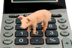Świnia i kalkulatorzy obraz stock