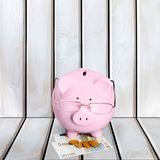 Świnia, podatek, Pieniężny Advisor Zdjęcie Royalty Free