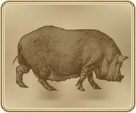 Świnia, ręki rysunkowa wektorowa ilustracja. Zdjęcia Stock