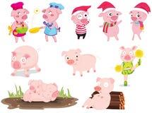 świnie Zdjęcie Stock