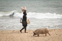 Świnie i rybacy w przylądka wybrzeżu, Ghana obraz stock