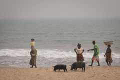 Świnie i rybacy w przylądka wybrzeżu, Ghana fotografia stock