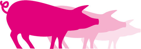 świnie różowią trzy Zdjęcia Royalty Free