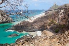 Świnie Wyrzucać na brzeg Fernando De Noronha wyspę Obrazy Stock