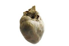 Świniowaci serca na białym tle Obrazy Stock