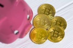 Świniowatego banka i kropli złociści bitcoins na białym drewnianym tle, oszczędzanie pieniądze dla przyszłościowego inwestorskieg obrazy royalty free