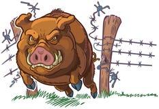 Świniowaty lub Dziki knur Rozbija Przez Płotowej Wektorowej kreskówki Obrazy Stock