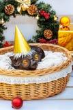 Świniowaty prosiaczek małego czarnego koszykowego łozinowego ślicznego Wietnamskiego trakenu nowego roku choinki dekoracj girland obraz stock