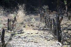 Świrzepy i fiszorki w lesie zdjęcie stock