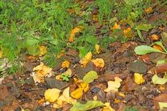 Świrzepy i kwiaty na ziemi zdjęcia stock