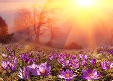 Świt nad wysokogórską doliną Fotografia Stock