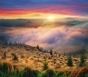 Świt w Alps gromadzić się Obraz Royalty Free