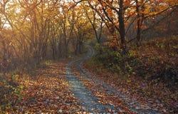 Świt w jesień lesie zdjęcia stock