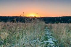 Świt w pszenicznym polu obraz royalty free