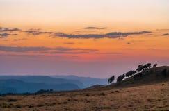 Świt w Semien górach, Etiopia fotografia royalty free