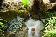 Źródło wiosna w Singapur ogródzie botanicznym Zdjęcie Stock