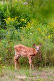 Źrebię w łące z wildflowers zdjęcia royalty free