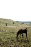 Źrebięcia pasanie w otwartym polu w lecie Fotografia Royalty Free