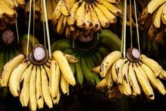 Żółci banany na miejscowego rynku Banany lub kulinarny banan dla bubla Dojrzała surowa bananowa wiązka w świetle słonecznym Zdjęcie Stock