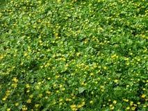 Żółci dekoracyjni kwiaty Zdjęcie Stock