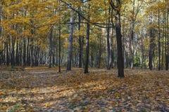 Żółci drzewa i ostatni ciepli dni w jesień parku fotografia stock
