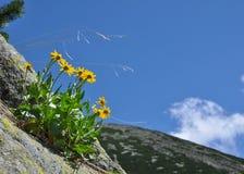 Żółci dzicy kwiaty obraz royalty free