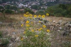 Żółci góra kwiaty zdjęcia stock