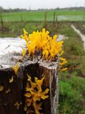 Żółci grzyby Obraz Royalty Free