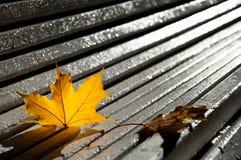 Żółci jesień liście klonowi kłama na drewnianej ławce w parku a zdjęcia royalty free