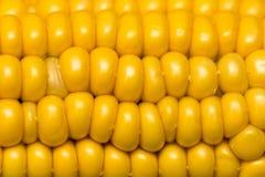 Żółci kukurydzani nasiona w cob jako tło Obrazy Stock