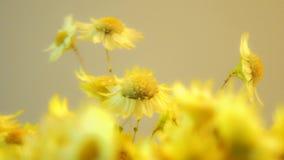 Żółci kwiaty z zamazanym skutkiem i światłami zbiory wideo
